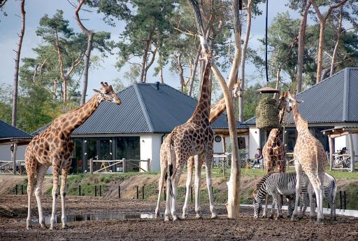 VIDEO: Safari Resort Beekse Bergen